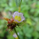flower of weed