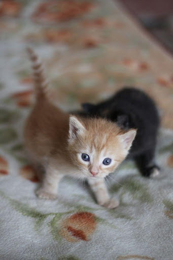 Cats Pictures and GIFs