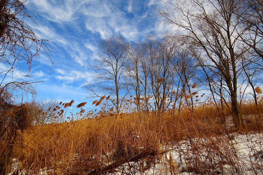 Old Dam Road by Erika  Kiley - Landscapes Prairies, Meadows & Fields ( sky, winter, grass, marsh )