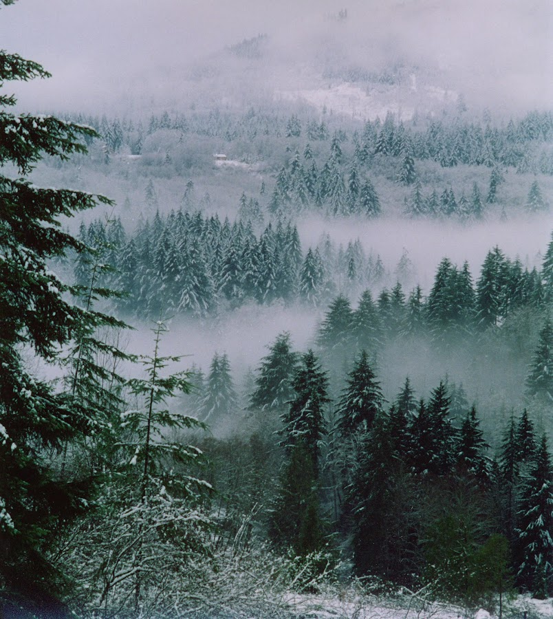 Winter Morning Mist by Carla Maloco - Landscapes Mountains & Hills ( washington state, winter, snow, trees, landscape, u.s.a., mist,  )