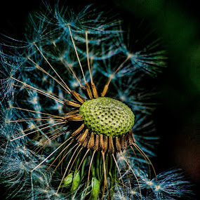 Rather like this one! by Ian Yates ヅ - Nature Up Close Other plants (  )