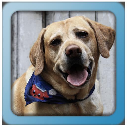 動物の音と名前 教育 App LOGO-硬是要APP