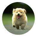Cute dog Puppy Wallpaper logo