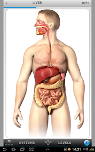 Anatomy Game- screenshot thumbnail