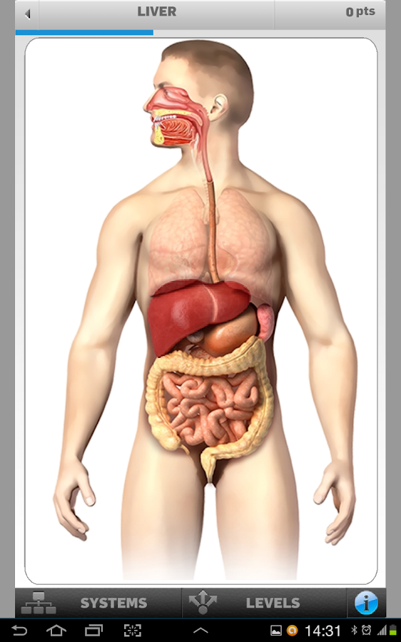 Anatomy Game - screenshot