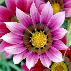 by Bero Planinec - Flowers Flower Gardens