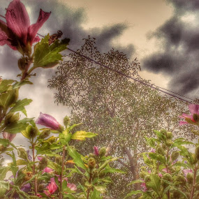 Flowers on House Fence by Nat Bolfan-Stosic - Uncategorized All Uncategorized ( fence, house, storm, flowers, rain )