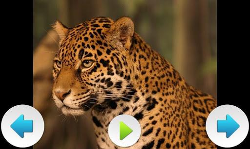 北美動物|玩音樂App免費|玩APPs