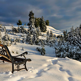 multiplex front seat by Dan Baciu - Nature Up Close Trees & Bushes ( eve, dracula, romania, visit, travel, landscape, panorama, love, life, nature, family, snow, bank, couple, year, water, biutiful, beautiful, christmas, new, winter, wedding, sunset, peace, trees, castle, sunrise, banks, bran, , Chair, Chairs, Sitting )