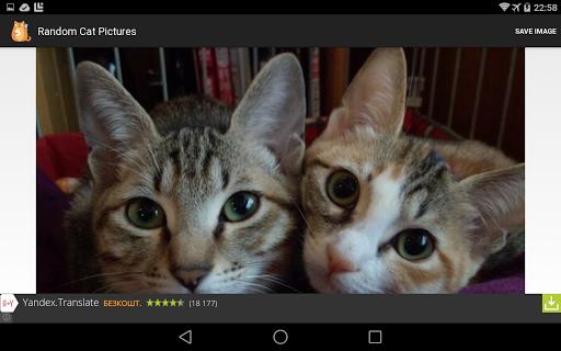 Random Cat Pictures