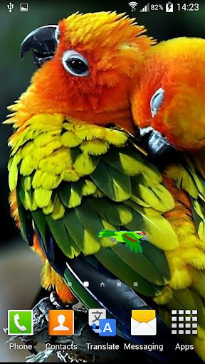 鳥アニメ壁紙