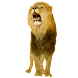 Lion Sticker widget