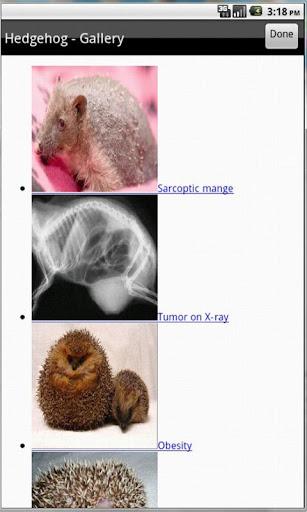 【免費醫療App】Exotic Pet Vet-APP點子