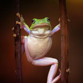 p e m a i n by Harry Aiee - Animals Amphibians