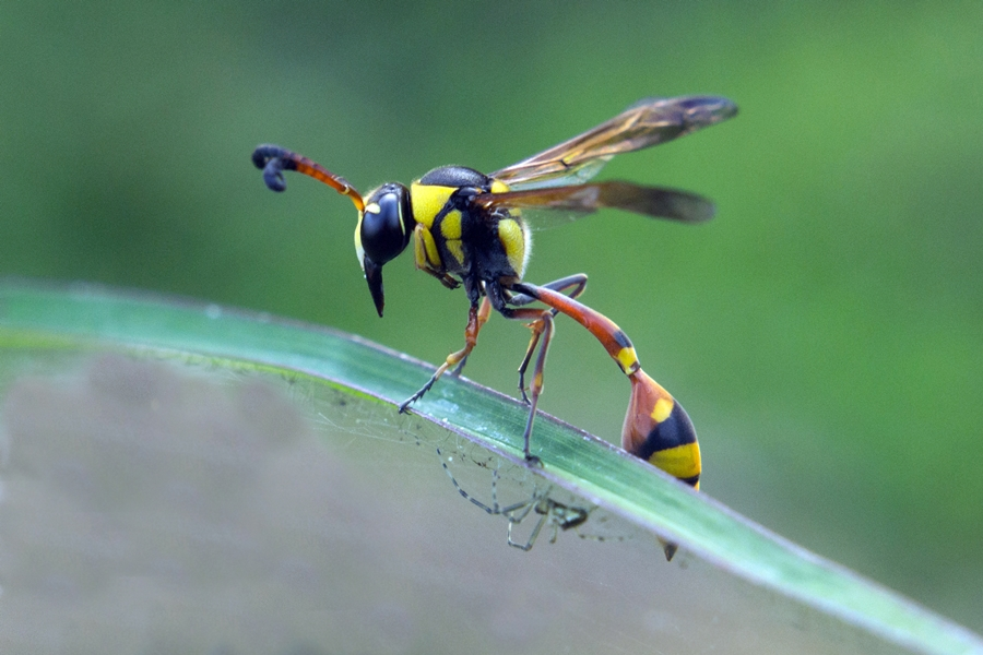 hold by Firdian Rahmatulah - Animals Insects & Spiders