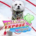 Cute Maltese Puppies! logo