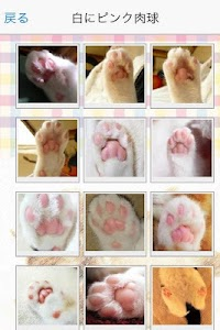 Cat paws Photo collection screenshot 1