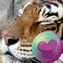 Tiger Series Live Wallpapers icon