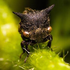 by Kumarasamy Selvarajoo - Animals Insects & Spiders