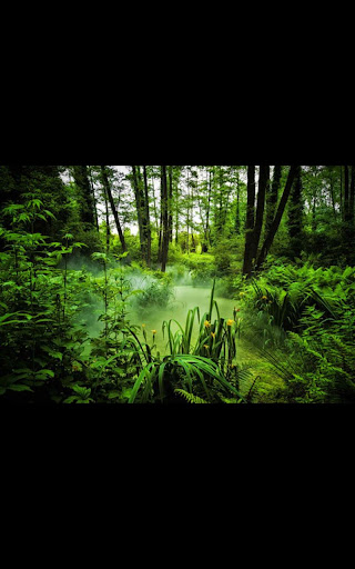 HD Photo Paradise Forest LWP