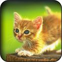 Cute Kitties Wallpapers icon