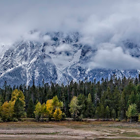 Tetons by Barb Hauxwell - Landscapes Mountains & Hills ( clouds, mountains, wyoming, cloudy, trees, jackson hole, dreary, gray, tetons )
