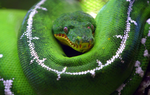 Python Live Wallpaper
