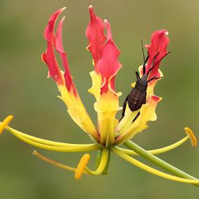 by Hindra Komara - Flowers Flowers in the Wild ( nature,  )