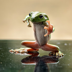 frog in kung fu by Harry Aiee - Animals Amphibians
