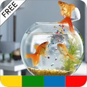 Saltwater Aquarium Tips - FREE