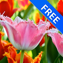 3D Fascinating Tulips Free icon