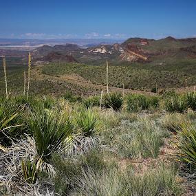 bIG bEND by Bill Redmond - Landscapes Deserts ( big bend national pard, mountains, desert, prarie, landscape )