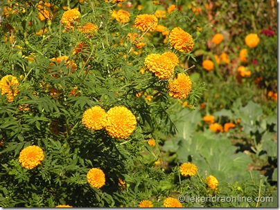 Flower : Leisure pics in Pokhara