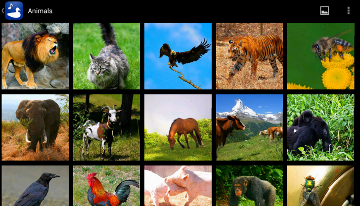 Animal Images & Animal Sounds - screenshot