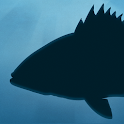 Fish Rules icon