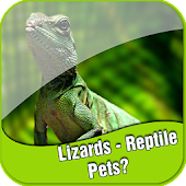 Lizards - Reptile Pets