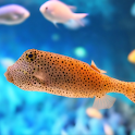 Ocean Fish Live Wallpaper icon