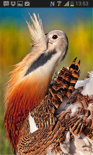 Aves de Villafáfila