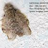 Notodontiidae