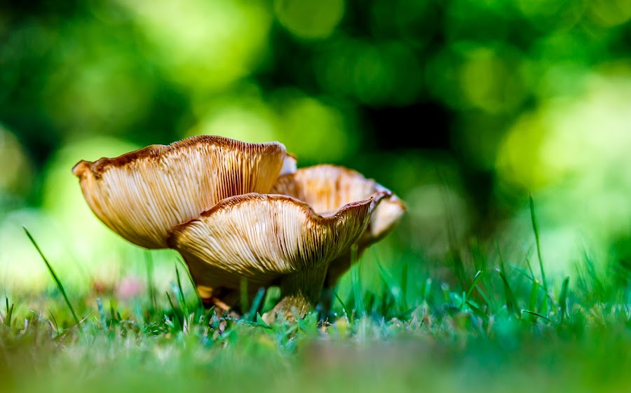 Mushroom by Olga Gerik - Nature Up Close Mushrooms & Fungi ( big mushroom,  )