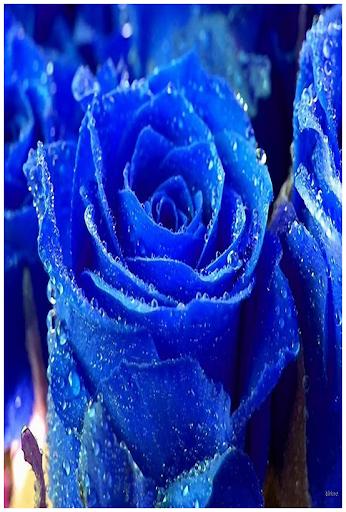 Blue Backgrounds Wallpaper