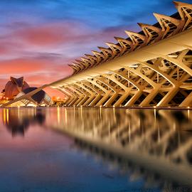 Ciudad de las Artes y las Ciencias, Valencia, Spain. by Tony Murray - Buildings & Architecture Architectural Detail ( valencia, ciudad de las artes y las ciencias, spain, ciencias )