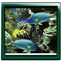 Aquarium Mega Photo Gallery logo