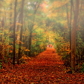 Afternoon Walk in Novvember by James Gramm - Nature Up Close Trees & Bushes ( fall leaves on ground, nature, color, afternoon, fall, path, trees, landscape, mist )