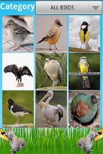 Birds Encyclopedia - screenshot thumbnail