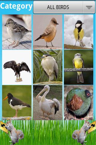 Birds Encyclopedia - screenshot
