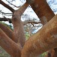 Arboles Nativos y Selvas de Colombia
