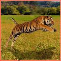 Tiger Hunter icon