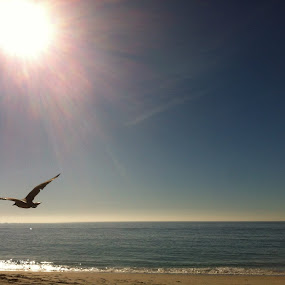 Rise and Shine by Sue Fulop - Instagram & Mobile iPhone ( bird, fly, flight )