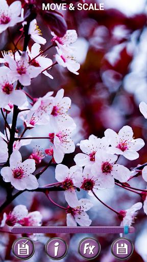 春天 花卉 背景 3D-手機軟件下載 HD 壁紙